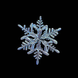 Snowflake macro photo - 13 February 2017 - 1 black