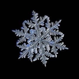 Alexey Kljatov - Snowflake macro photo - 13 February 2017 - 3 black