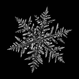 Snowflake Vector - Silverware Black by Alexey Kljatov