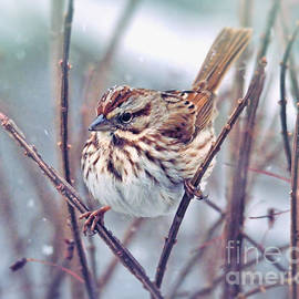 Kerri Farley - Snowflakes on a Song Sparrow