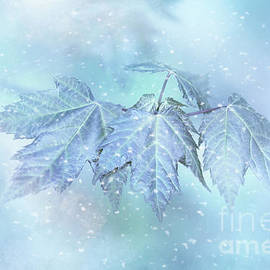 Anita Pollak - Snowy Baby Leaves