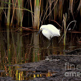 Snowy Egret In Late Afternoon by Susan Wiedmann