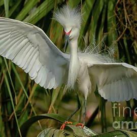 Snowy Egret in the trees by Myrna Bradshaw