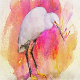 Snowy Egret by Judi Bagwell