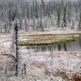 Snowy Evergreens and Pond by Connie Fox