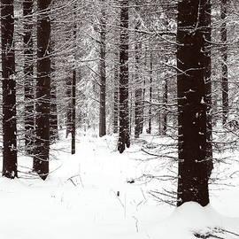 Snowy Forest in BW by Jouko Lehto
