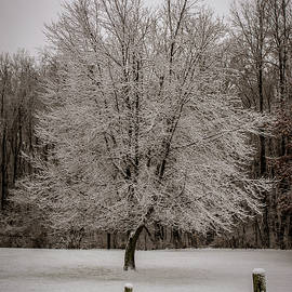 Snowy Maple by Enzwell Designs