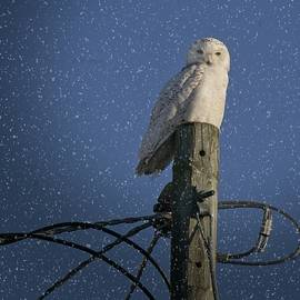 LuAnn Griffin - Snowy on a High Perch