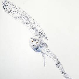 Neha Soni - Snowy Owl