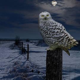 Spadecaller - Snowy Owl On A Winter Night