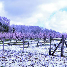Lydia Holly - Snowy Peach Orchard