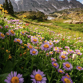 Snowy Range Flowers by Emily Dickey