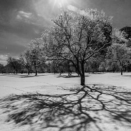 Bridget Calip - Snowy Sunburst Tree