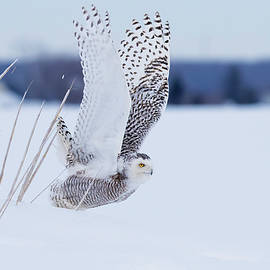 Snowy Take Off by Mircea Costina Photography