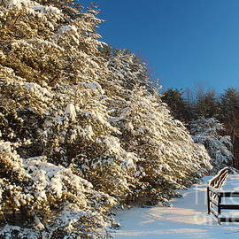 Maili Page - Snowy Trees and Snowy Fences