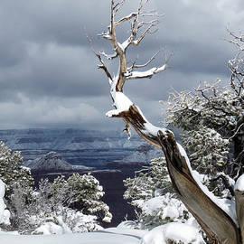 Laurel Powell - Snowy View