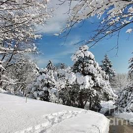 Elaine Manley - Snowy Wonderland