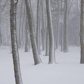 Snowy Woods 3 by Daralyn Maxwell