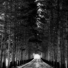 Maggie Vlazny - SnowyTrail to Winter