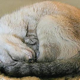 Snugglepuss