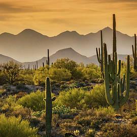 Saija Lehtonen - So Many Layers to the Sonoran