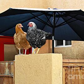 So - Why Did the Chicken Cross the Street by Gabriele Pomykaj