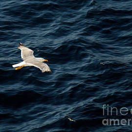 Soaring Above the Deep Blue Sea by Sue Melvin