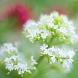 Sarah-fiona Helme - Soft and Gentle