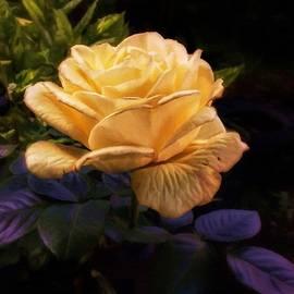 YoursByShores Isabella Shores - Soft Gold Rose