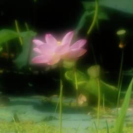 Igor Malinovskii - Soft impression by lotus, 10