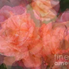 Carol Groenen - Soft Pastel Roses Abstract