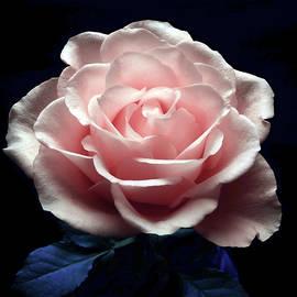 Johanna Hurmerinta - Soft Pink Beauty