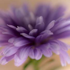 Connie Grainger - Soft Purple Macro Flower
