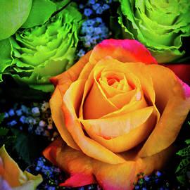 Soft Textured Rose - Garry Gay