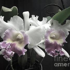 Jeannie Rhode - Soft White Orchids