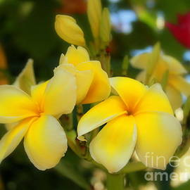 Soft Yellow blossoms by Charlene Cox