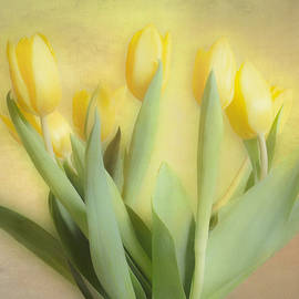 Soft Yellow Tulips by Hal Halli