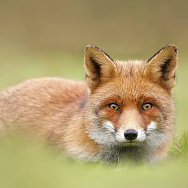 SoftFox series - Intriguing Eyes - Roeselien Raimond