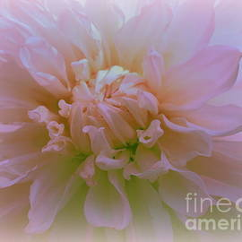 Dora Sofia Caputo Photographic Design and Fine Art - Softly In Pink - Dahlia