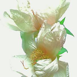 Alexander Vinogradov - SOFTNESS of PEONY FLOWER.
