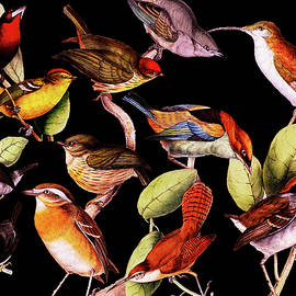 Joseph Mosley - Solar Life Birds