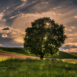 Solitarty Backlit Tree in the Palouse - Mark Kiver