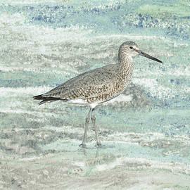Spadecaller - Solitary Shorebird
