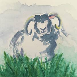 Solitary Smiling Sheep