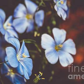 Claudia M Photography - Something blue