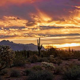Saija Lehtonen - Sonoran Saguaro Sunrise