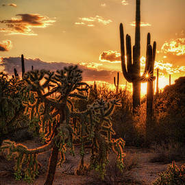 Saija Lehtonen - Sonoran Sunset on the Horizon