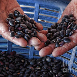 Sorting black beans in Guatemala by Tatiana Travelways
