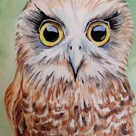 Anne Gardner - Southern Boobook Owl