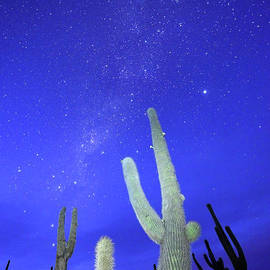 James Brunker - Southern Hemisphere Night Sky and Cactus